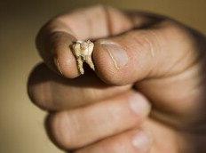 Dentes encontrado em gruta de Israel têm mais de 400 mil anos-Oded Balilty/AP