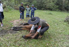 Acostumado a participar de provas campeiras, Leandro Machado tentou ajudar o animal-Ronaldo Bernardi/Agencia RBS