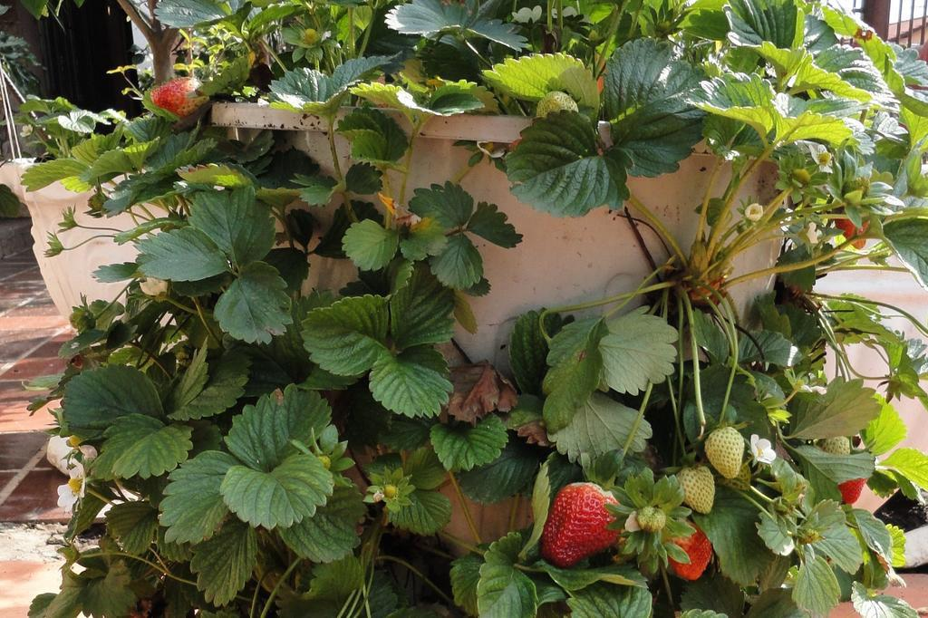 flores e jardins fotos: fotos para vê-las em tamanho maior). Foto: Julio Cesar Giuliani