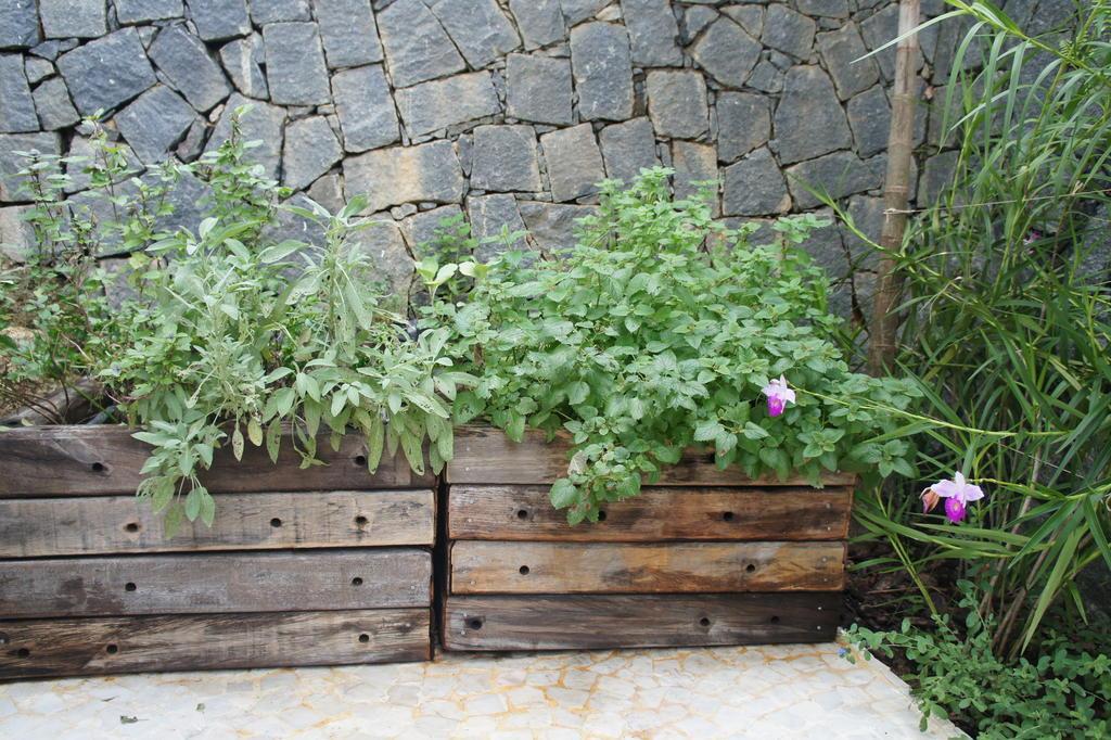 plantas jardim litoral : plantas jardim litoral:Marcam o projeto paisagístico elementos naturais como dormentes nos