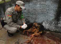 BM foi chamada para ajudar a socorrer o cachorro - Charles Guerra