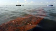 Dados oficiais indicam que a cada dia são derramados aproximadamente 800 mil litros de petróleo ao mar - Larry W. Smith / EFE